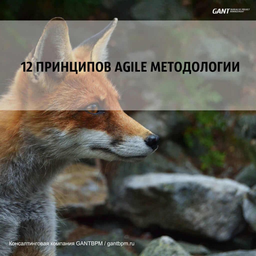 Принципы Agile методологии – 12 основных областей